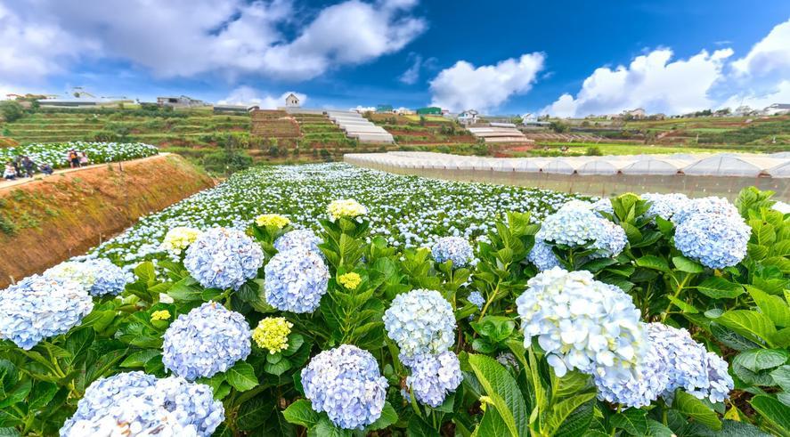 ทัวร์เวียดนามใต้ ดาลัด 3 วัน 2 คืน สวนดอกไม้ไฮเดรนเยีย สวนแห่งแสงที่ดาลัด  นั่งรถม้าชมเมือง บิน VZ