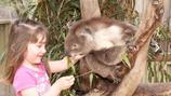 สวนสัตว์พื้นเมือง Maru Koala and Animal Park