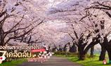 """จองที่ชมซากุระอย่างไรให้ไม่โดนว่า !! 7 เคล็ดลับปูเสื่อนั่งปิกนิก """"ชมซากุระ"""" ที่ญี่ปุ่น"""