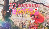 ตะลุยเก็บ 10 จุดชมซากุระในโตเกียว ไปที่เดียวไม่เคยพอ