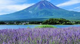 ทัวร์ญี่ปุ่น โตเกียว 4 วัน 3 คืน ชมทุ่งดอกลาเวนเดอร์ ขึ้นภูเขาไฟฟูจิชั้น5 บิน XJ