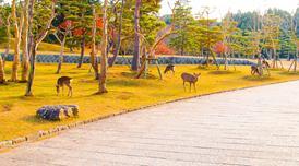 ทัวร์ญี่ปุ่น โอซาก้า เกียวโต 6 วัน 4 คืน ซากุระและใบไม้เปลี่ยนสีโอบาระ สวนกวางนารา บิน XW
