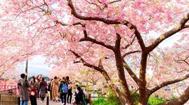 ทัวร์ญี่ปุ่น โตเกียว 5 วัน 3 คืน หมู่บ้านโอชิโนะฮัคไค เทศกาลซากุระคาวาสึ บิน XW