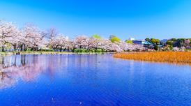 ทัวร์ญี่ปุ่น โตเกียว นิกโก้ 5 วัน 3 คืน ซากุระริมแม่น้ำสุมิดะ ชมซากุระสวนอุเอโนะ บิน TG