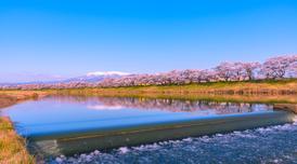 ทัวร์ญี่ปุ่น เซนได 6 วัน 4 คืน ล่องเรืออ่าวมัตสึชิมะ ซากุระแม่น้ำคันนงจิ ชมฮิโตะเมะเซ็มบงซากุระ บิน XJ