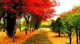 ทัวร์ญี่ปุ่น ฮอกไกโด 5 วัน 3 คืน ภูเขาไฟอุสุซาน อุทยานโมอาย ชมใบไม้เปลี่ยนสีสวนฮิราโอกะ บิน XJ