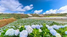 ทัวร์เวียดนามใต้ โฮจิมินห์ มุยเน่ ดาลัด 4 วัน 3 คืน สวนดอกไฮเดรนเยีย นั่งรถจิ๊ปตะลุยทะเลทรายขาว บิน VJ