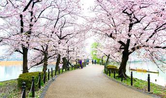 ทัวร์ญี่ปุ่น โตเกียว 5 วัน 3 คืน วัดอาซากุสะ ชมซากุระสวนอุเอโนะ ภูเขาไฟฟูจิ บิน XJ