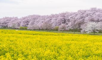 ทัวร์ญี่ปุ่น โตเกียว 5 วัน 3 คืน วัดอาซากุสะ สวนกอนเก็นโด ภูเขาไฟฟูจิ(ชั้น5) บิน SL