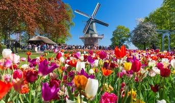 ทัวร์ยุโรป เยอรมัน เบลเยี่ยม เนเธอร์แลนด์ 8 วัน 5 คืน หมู่บ้านกังหันลมซานสคันส์ เทศกาลดอกทิวลิป บิน QR
