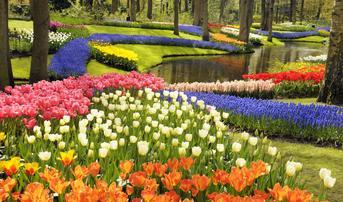 ทัวร์ยุโรป ฝรั่งเศส เบลเยี่ยม เยอรมัน เนเธอร์แลนด์ 7 วัน 4 คืน พระราชวังแวร์ซายน์ สวนเคอเคนฮอฟ บิน EK