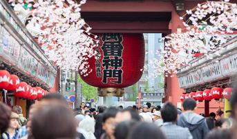 ทัวร์ญี่ปุ่น โตเกียว นิกโก้ 6 วัน 3 คืน วัดอาซากุสะ ภูเขาไฟฟูจิ ชมดอกชิบะซากุระ บิน XJ