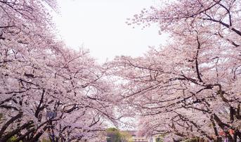 ทัวร์ญี่ปุ่น โตเกียว 5 วัน 3 คืน สวนอุเอโนะ หมู่บ้านโอชิโนะฮักไค บิน XJ