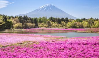 ทัวร์ญี่ปุ่น โตเกียว 5 วัน 3 คืน วัดอาซากุสะ ภูเขาไฟฟูจิ ชมดอกชิบะซากุระ บิน SL