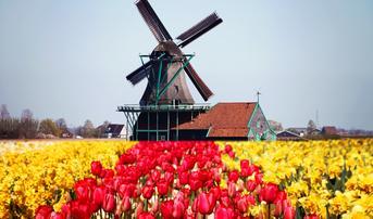 ทัวร์ยุโรป เยอรมัน เบลยี่ยม เนเธอร์แลนด์ ลักเซมเบิร์ก ฝรั่งเศส 8 วัน 5 คืน หมู่บ้านกีธูร์น สวนเคอเคนฮอฟ บิน QR
