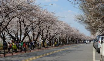 ทัวร์เกาหลี โซล 5 วัน 3 คืน เกาะนามิ สวนสนุกเอเวอร์แลนด์ ชมซากุระถนนยออิโด บิน ZE