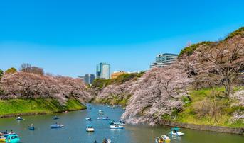 ทัวร์ญี่ปุ่น โตเกียว 5 วัน 3 คืน สวนอุเอโนะ คลองเมกุโระ ชมสวนซากุระยามะ บิน TG