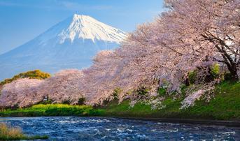 ทัวร์ญี่ปุ่น โตเกียว 5 วัน 3 คืน ภูเขาไฟฟูจิ วัดอาซากุสะ สวนฮิตาชิซีไซด์ปาร์ค บิน JL