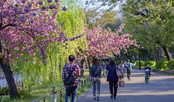 ทัวร์ญี่ปุ่น โตเกียว ทาคายาม่า นาโกย่า 5 วัน 3 คืน สวนอุเอะโนะ หมู่บ้านชิราคาวาโกะ ชมซากุระแม่น้ำซาไก บิน SL