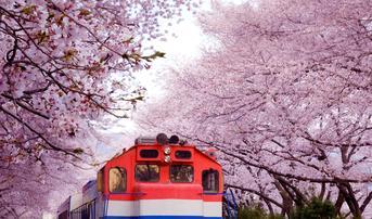 ทัวร์เกาหลี ปูซาน 5 วัน 3 คืน อุทยานแห่งชาติพัลกงซาน เทศกาลดอกซากุระบานจินแฮบิน TW