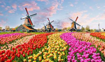 ทัวร์ยุโรป เยอรมัน เนเธอร์แลนด์ เบลเยี่ยม ลักเซมเบิร์ก ฝรั่งเศส 8 วัน 5 คืน สวนเคอเคนฮอฟ บิน QR