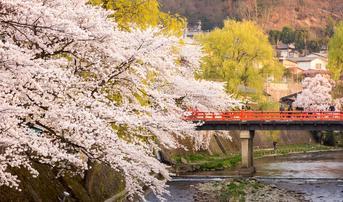 ทัวร์ญี่ปุ่น นาโกย่า ทาคายาม่า โตเกียว 5 วัน 4 คืน หมู่บ้านชิราคาวาโกะ ชมซากุระสะพานนาคะบาชิ บิน SL