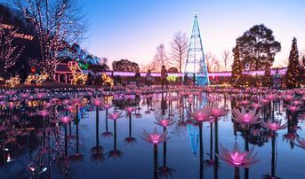 ทัวร์ญี่ปุ่น โตเกียว 5 วัน 3 คืน หมู่บ้านโอชิโนะฮักไก งานประดับไฟ ณ สวนดอกไม้อาชิคางะ บิน TG