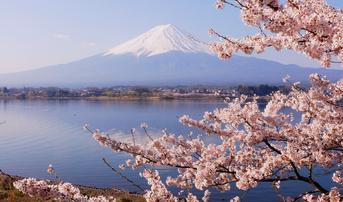 ทัวร์ญี่ปุ่น โตเกียว 5 วัน 3 คืน วัดอาซากุสะ ชมซากุระริมทะเลสาบคาวากูจิโกะ บิน XW