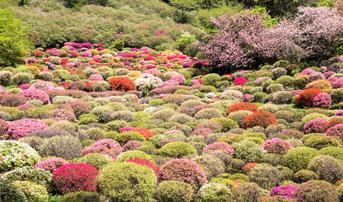 ทัวร์ญี่ปุ่น ฟุกุโอกะ 5 วัน 3 คืน สวนสนุกเฮ้าส์เทนบอช ชมซากุระ ณ สวนมิฟูเนะยามะ ราคุเอน บิน SL