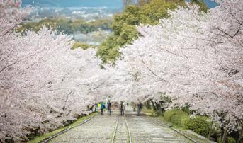 ทัวร์ญี่ปุ่น นาโกย่า โอซาก้า 5 วัน 4 คืน จุดชมซากุระแม่น้ำชินซาไก ทางรถไฟสายเก่าเคอาเกะอินไคลน์ บิน SL