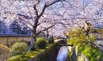 ทัวร์ญี่ปุ่น โอซาก้า ทตโตริ 5 วัน 4 คืน วัดคิโยะมิซุ ชมซากุระถนนนักปราชญ์ บิน SL