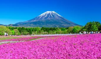 ทัวร์ญี่ปุ่น โตเกียว ทาคายาม่า โอซาก้า 6 วัน 4 คืน ชิราคาวาโกะ เทศกาลฟูจิชิบะซากุระ ชมซากุระแม่น้ำซาไก บิน TG