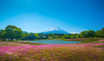 ทัวร์ญี่ปุ่น โตเกียว 5 วัน 3 คืน หมู่บ้านโอชิโนะฮัคไค ชมเทศกาลดอกชิบะซากุระ บิน SL