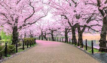 ทัวร์ญี่ปุ่น โตเกียว 5 วัน 3 คืน วัดอาซากุสะ สวนสาธารณะอุเอโนะ ภูเขาไฟฟูจิชั้น 5 บิน SL