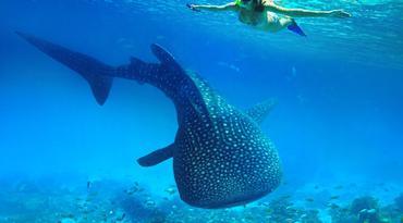 ทัวร์ฟิลิปปินส์ เซบู 4 วัน 2 คืน เกาะโบโฮล เนินช็อคโกแลต ว่ายน้ำดูฉลามวาฬ บิน PR