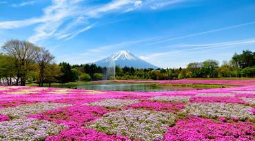 ทัวร์ญี่ปุ่น โตเกียว 5 วัน 3 คืน ภูเขาไฟฟูจิ(ชั้น 5) เทศกาลชิบะซากุระ บิน XW
