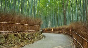 ทัวร์ญี่ปุ่น โอซาก้า เกียวโต ทาคายาม่า 6 วัน 4 คืน ป่าไผ่อาราชิยาม่า หมู่บ้านชิราคาวาโกะ ชมซากุระสะพานนาคะบาชิ บิน XW