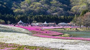 ทัวร์ญี่ปุ่น โตเกียว 5 วัน 3 คืน วัดอาซากุสะ ภูเขาไฟฟูจิชั้น 5 ทุ่งดอกพิงค์มอส บิน TR