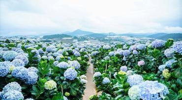 ทัวร์เวียดนามใต้ ดาลัด มุยเน่ โฮจิมินห์ 4 วัน 3 คืน สวนดอกไฮเดรนเยีย รถจิ๊ปตะลุยทะเลทรายขาว บิน VZ