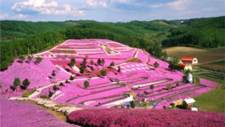 สวนดอกไม้ชิจิคุ