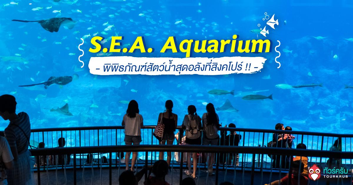 ตะลอนเที่ยว 1 วัน >> S.E.A. Aquarium พิพิธภัณฑ์สัตว์น้ำสุดอลังที่สิงคโปร์ !!