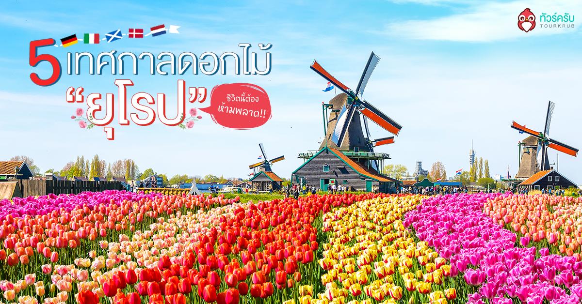 รวม 5 เทศกาลดอกไม้ ยุโรป ชีวิตนี้ต้องห้ามพลาด !! สวยทุกที่ น่าไปทุกอัน