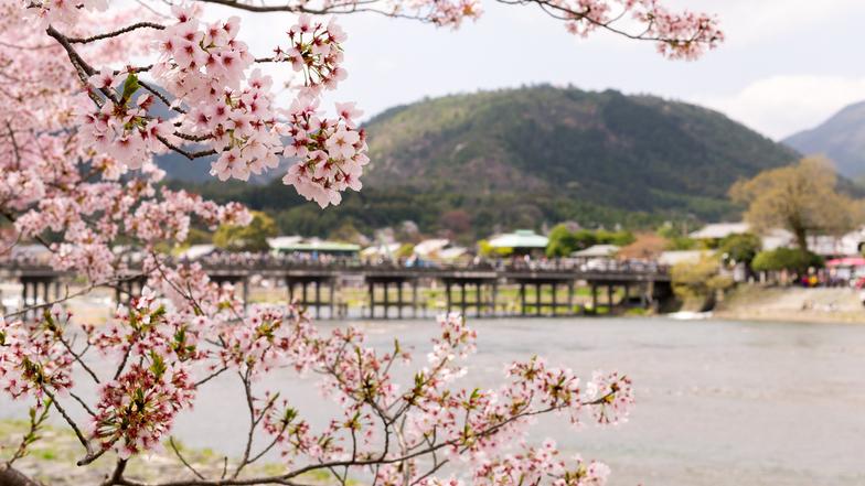 ทัวร์ญี่ปุ่น โอซาก้า ทาคายาม่า เกียวโต 5 วัน 3 คืน หมู่บ้านชิราคาวะโกะ ชมซากุระบริเวณแม่น้ำซาไก บิน ไทยแอร์เอเชียเอกซ์