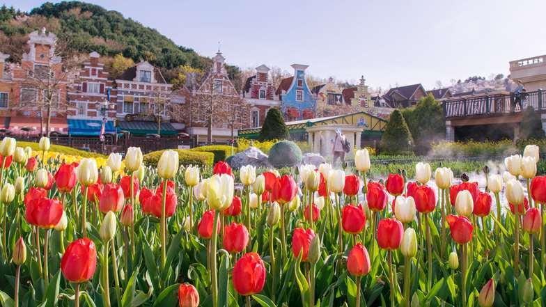 ทัวร์เกาหลี กรุงโซล 6 วัน 3 คืน เทศกาลทิวลิปสวนสนุกเอเวอร์แลนด์ สะพานกระจก Soyanggang  บิน ไทยแอร์เอเชียเอกซ์