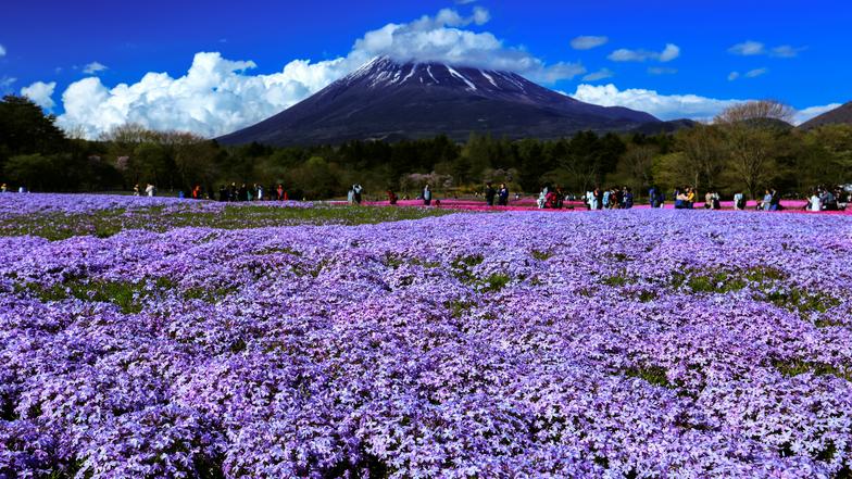 ทัวร์ญี่ปุ่น โตเกียว 4 วัน 3 คืน ภูเขาไฟฟูจิ(ชั้นที่5) ชมทุ่งดอกลาเวนเดอร์บานสะพรั่ง(เฉพาะเดือนมิ.ย.-ก.ค.เท่านั้น)  บิน ไทยแอร์เอเชียเอกซ์